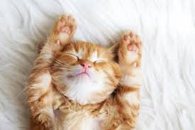 slapen als een katje